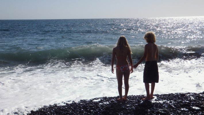 Canaries (12)